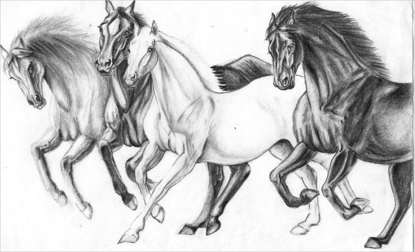 Wild Horses Drawing For Download