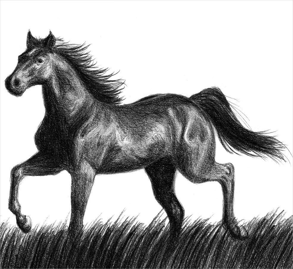 Free Black Horse Drawing