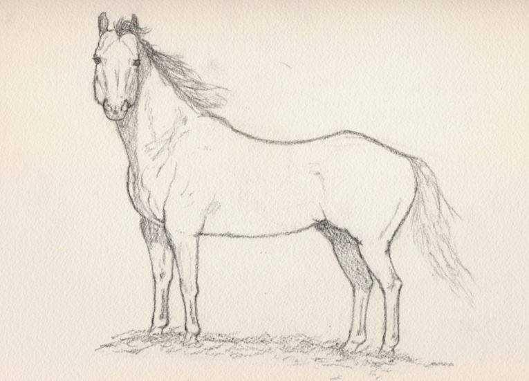 Horse Drawing For Download
