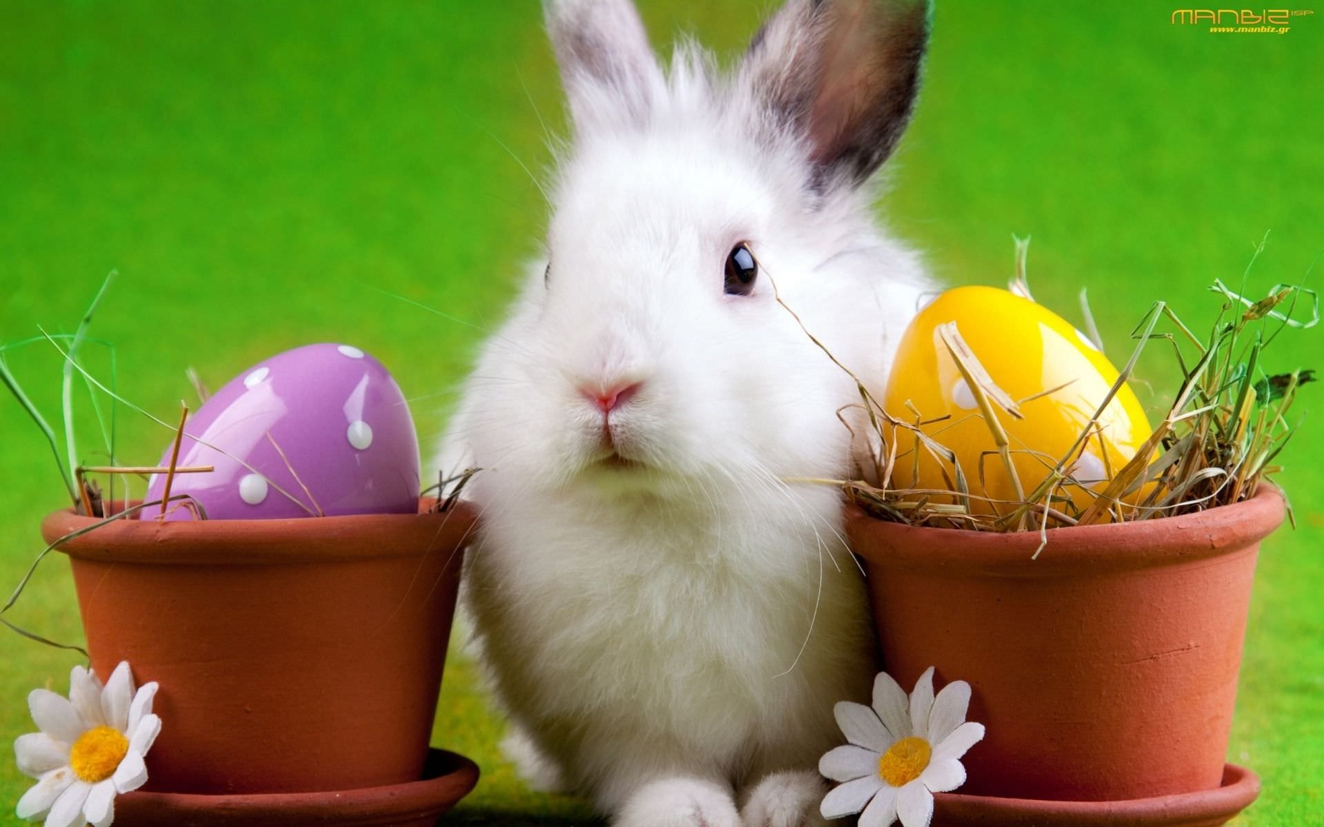 Amazing Easter Bunny Wallpaper