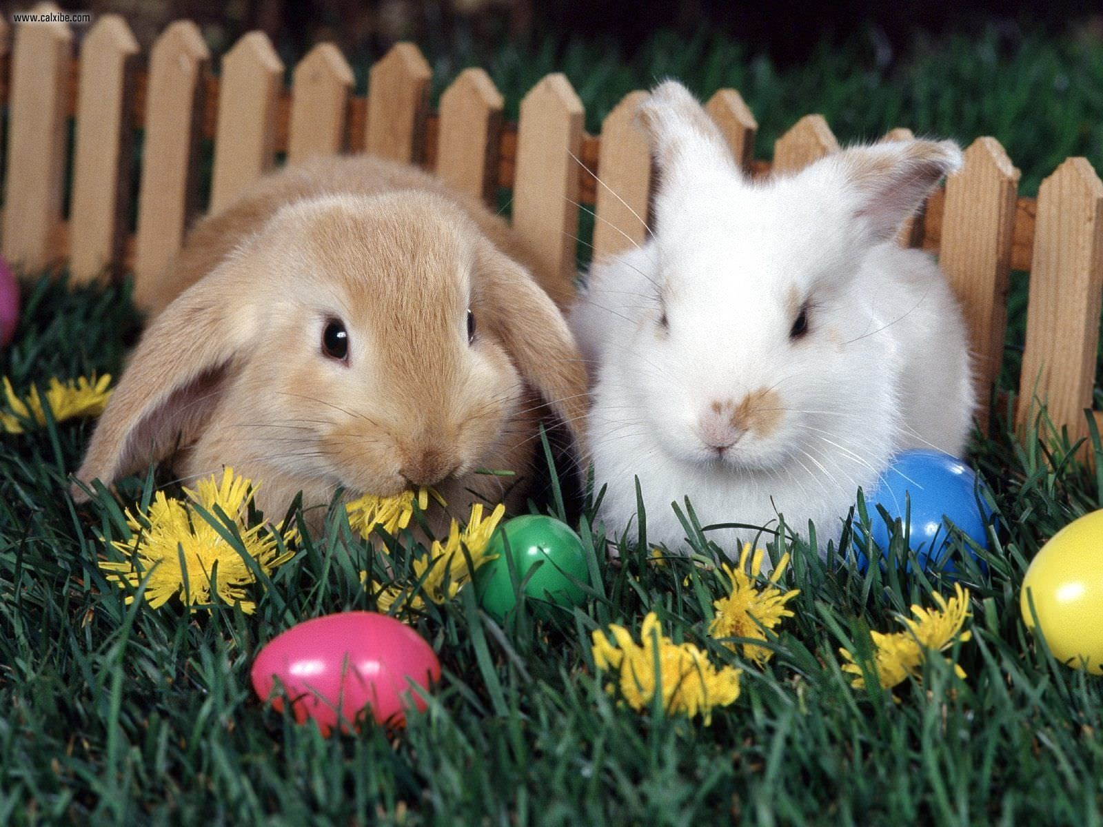 Easter Bunny Eggs Wallpaper For You