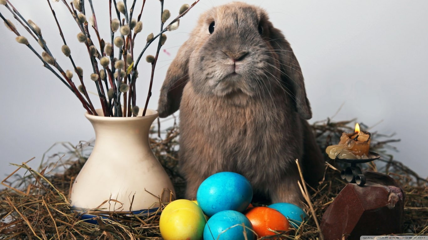 Awesome Easter Bunny Wallpaper