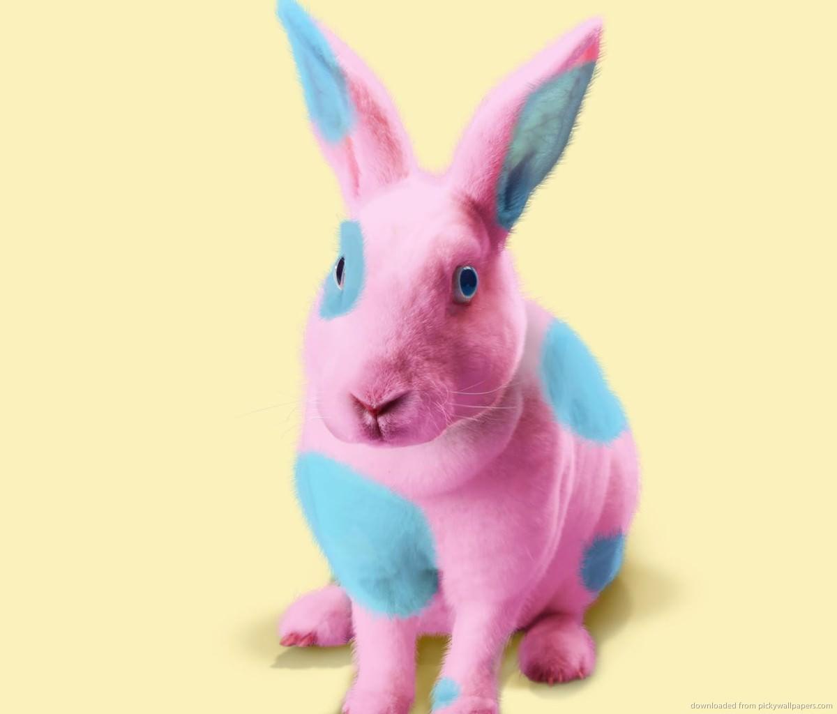 bunny 2016 easter 4k - photo #40