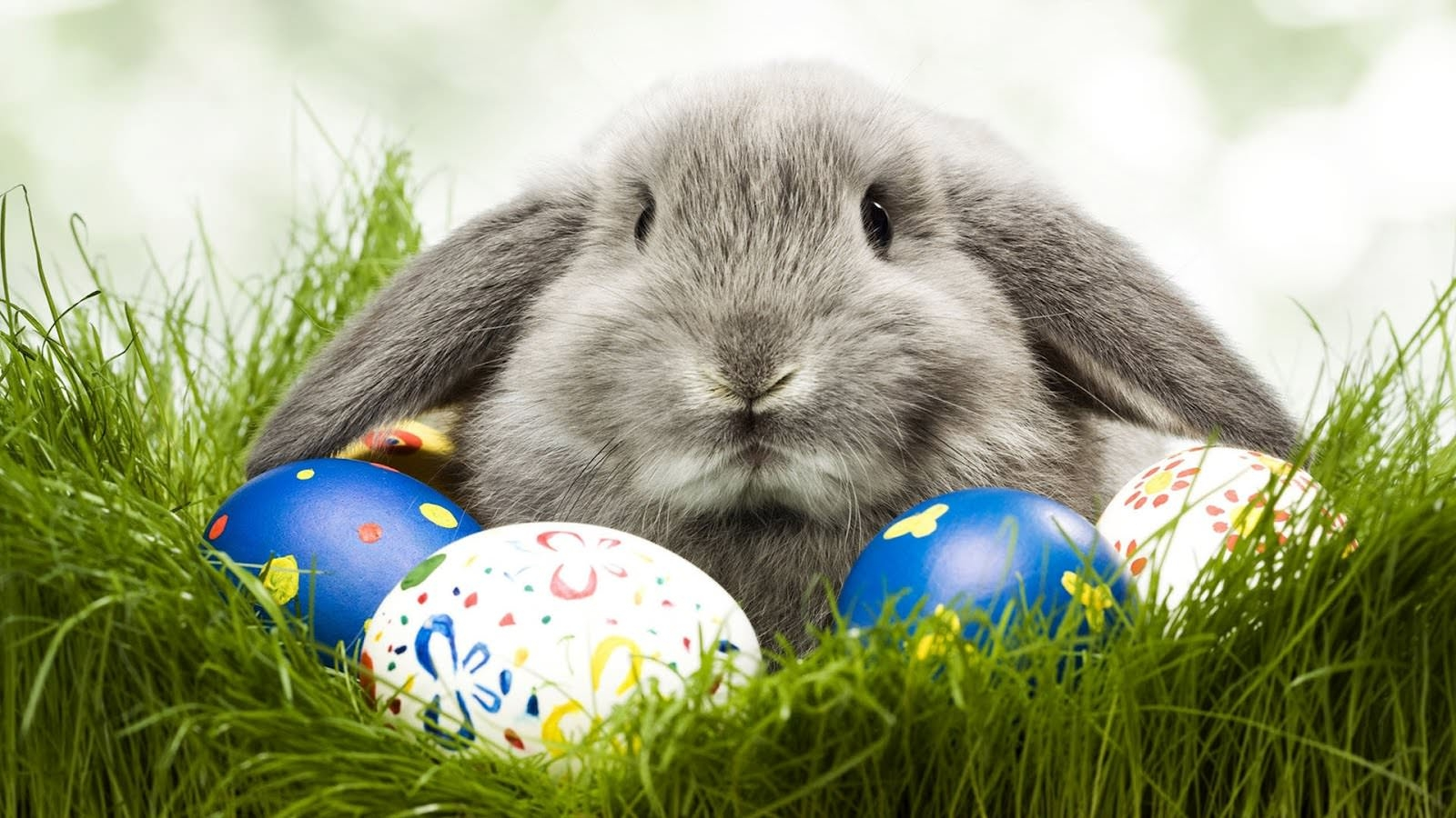 Easter Bunny Wallpaper For You