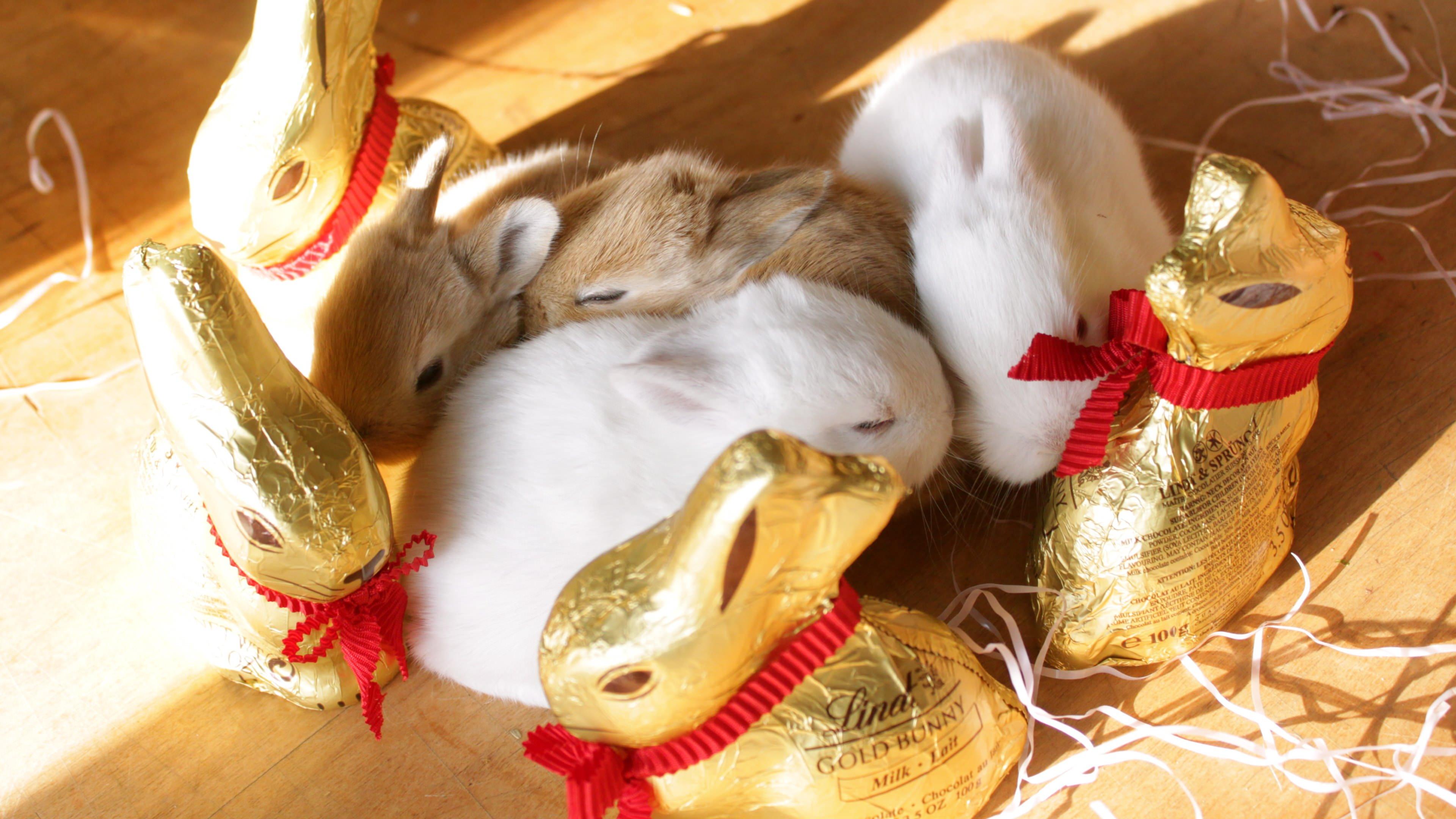 bunny 2016 easter 4k - photo #7