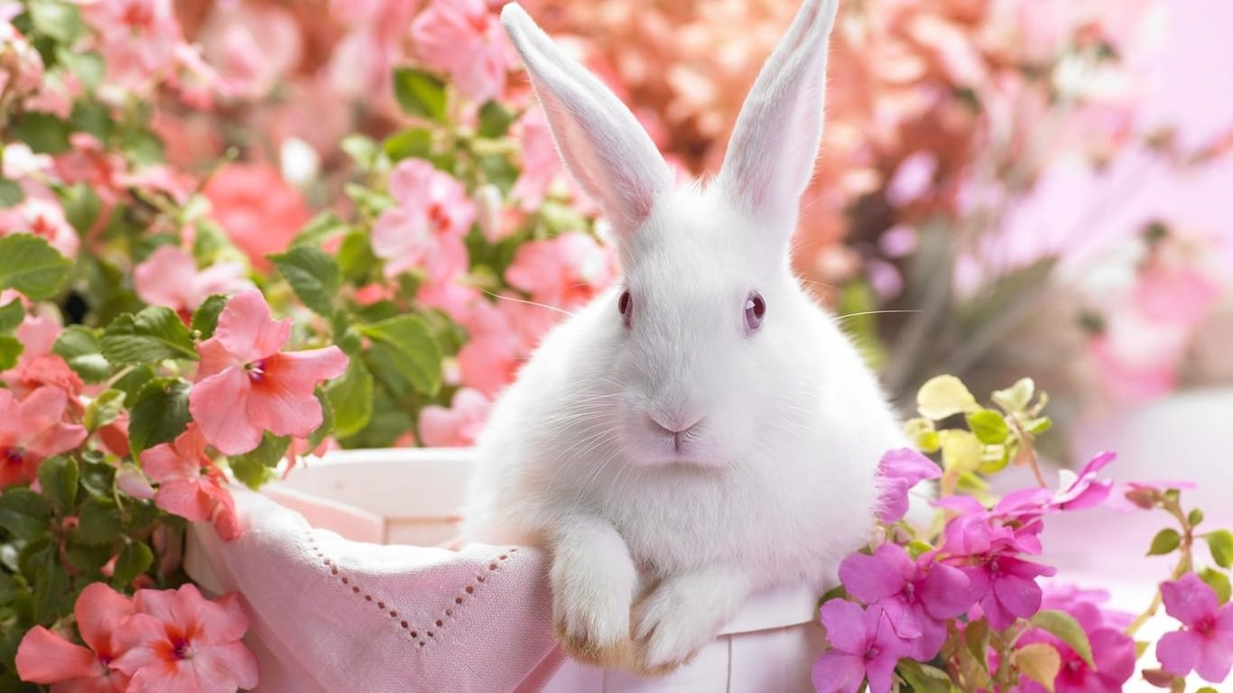 Easter Bunny Wallpaper For Download