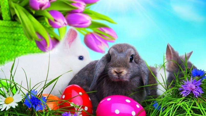 Fantastic Easter Bunny Wallpaper