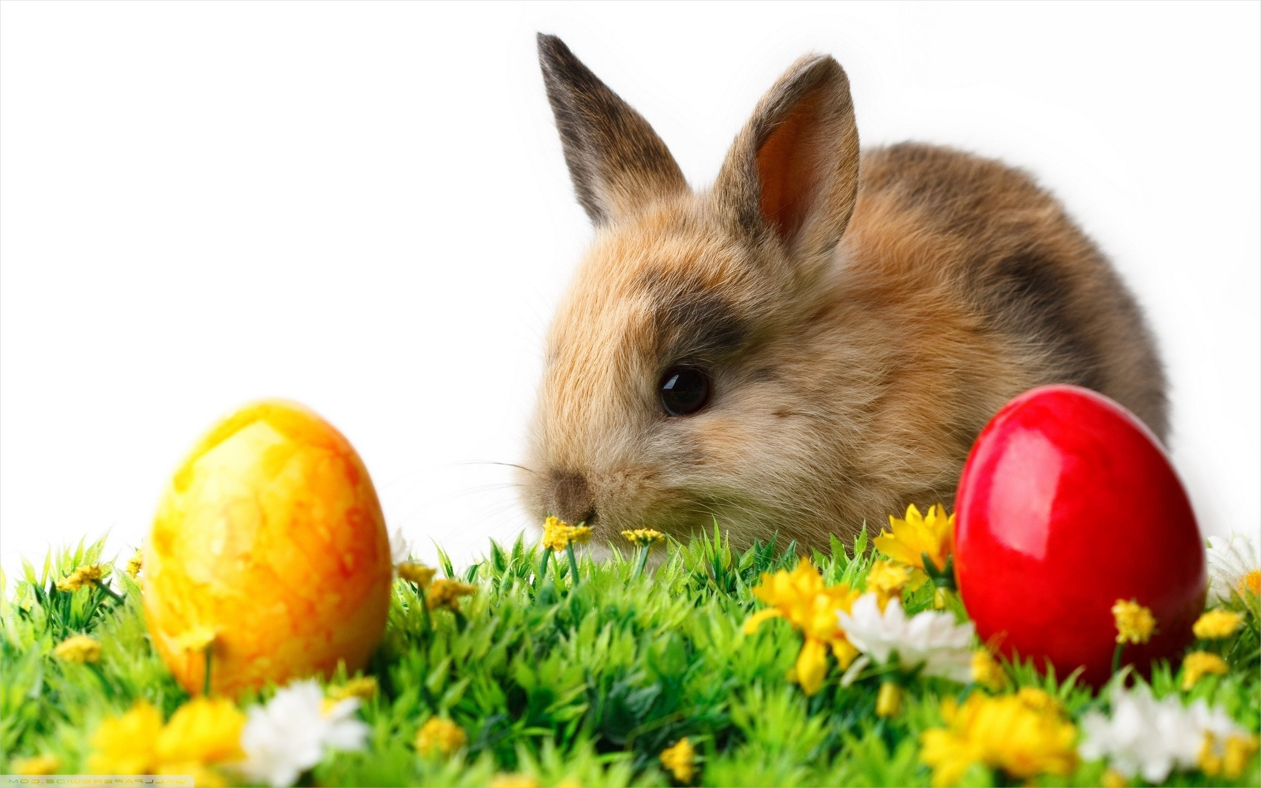 Easter Bunny with Colorful Eggs Wallpaper