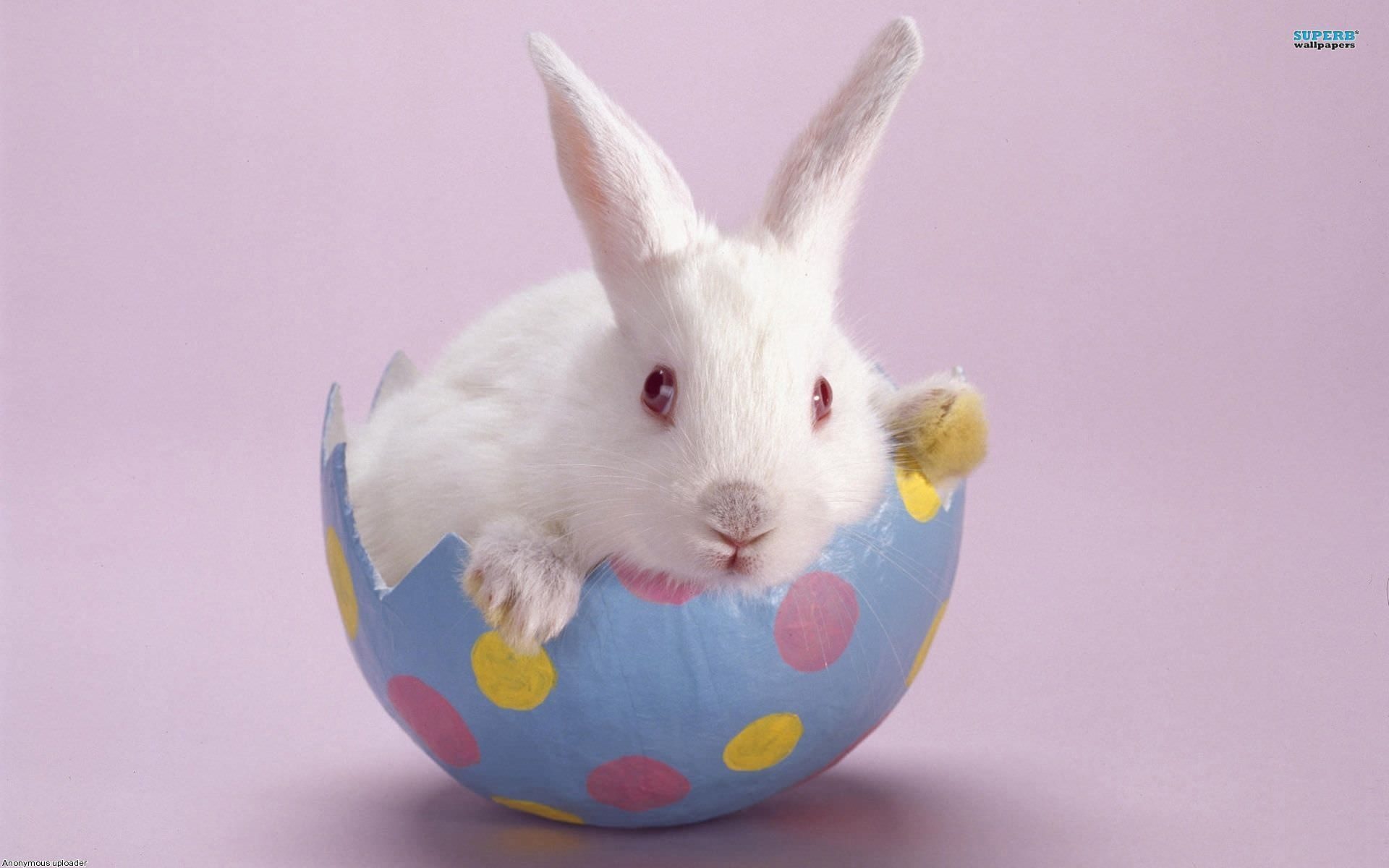 Free 30 Easter Bunny Wallpapers In Psd Vector Eps