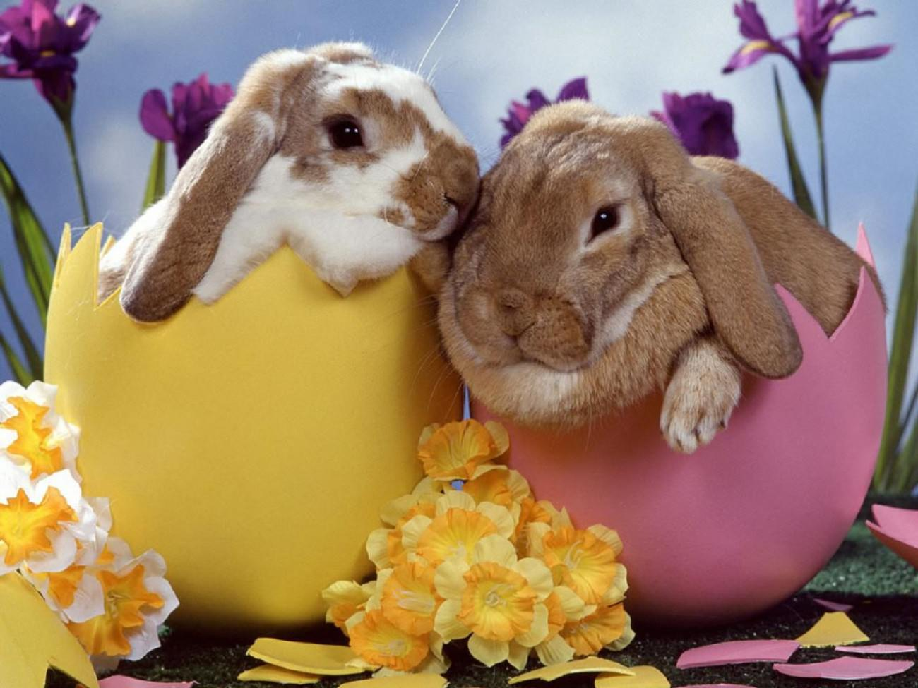 Easter Bunny Desktop Wallpaper