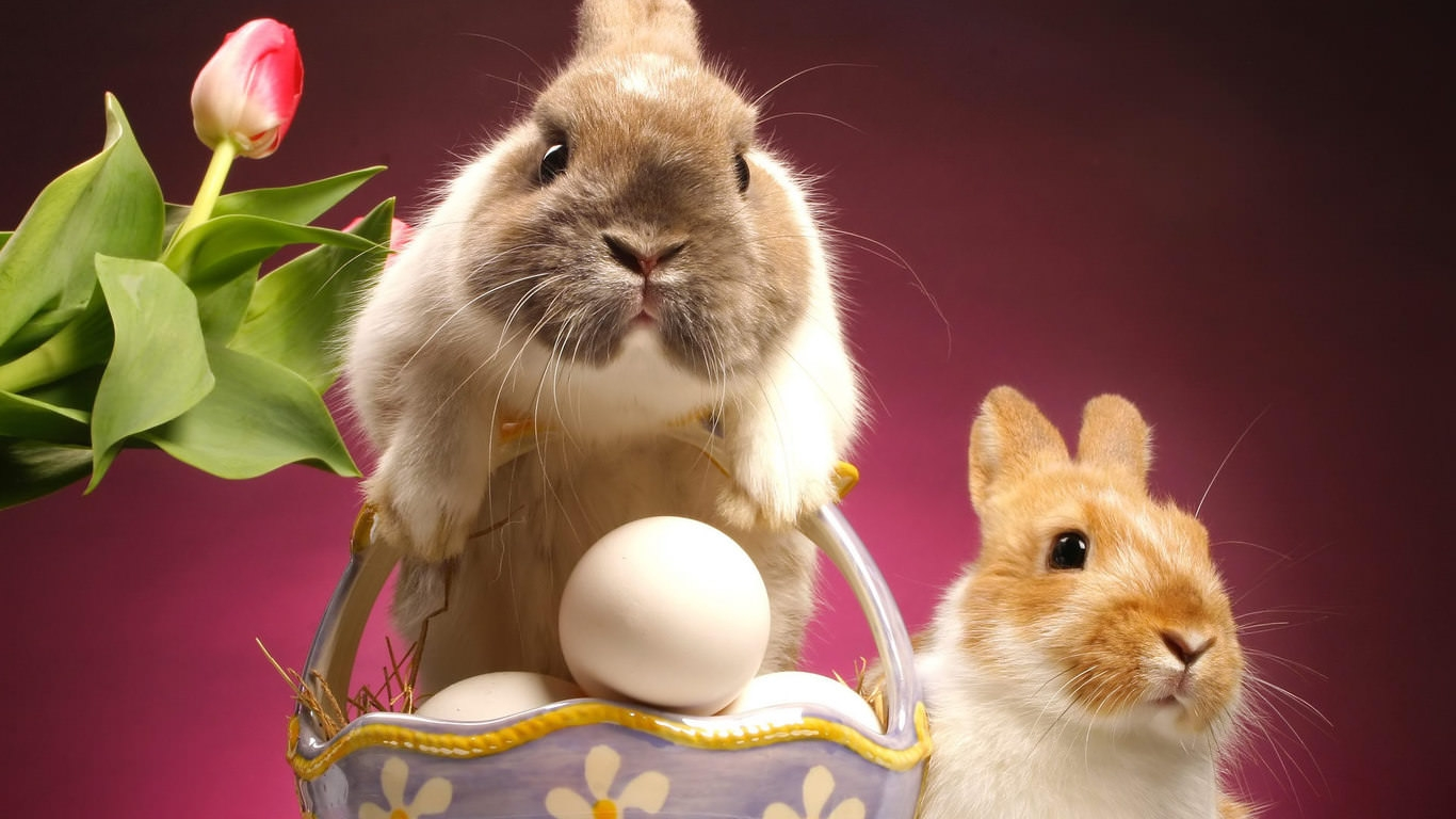 Excellent Easter Bunnies Wallpaper