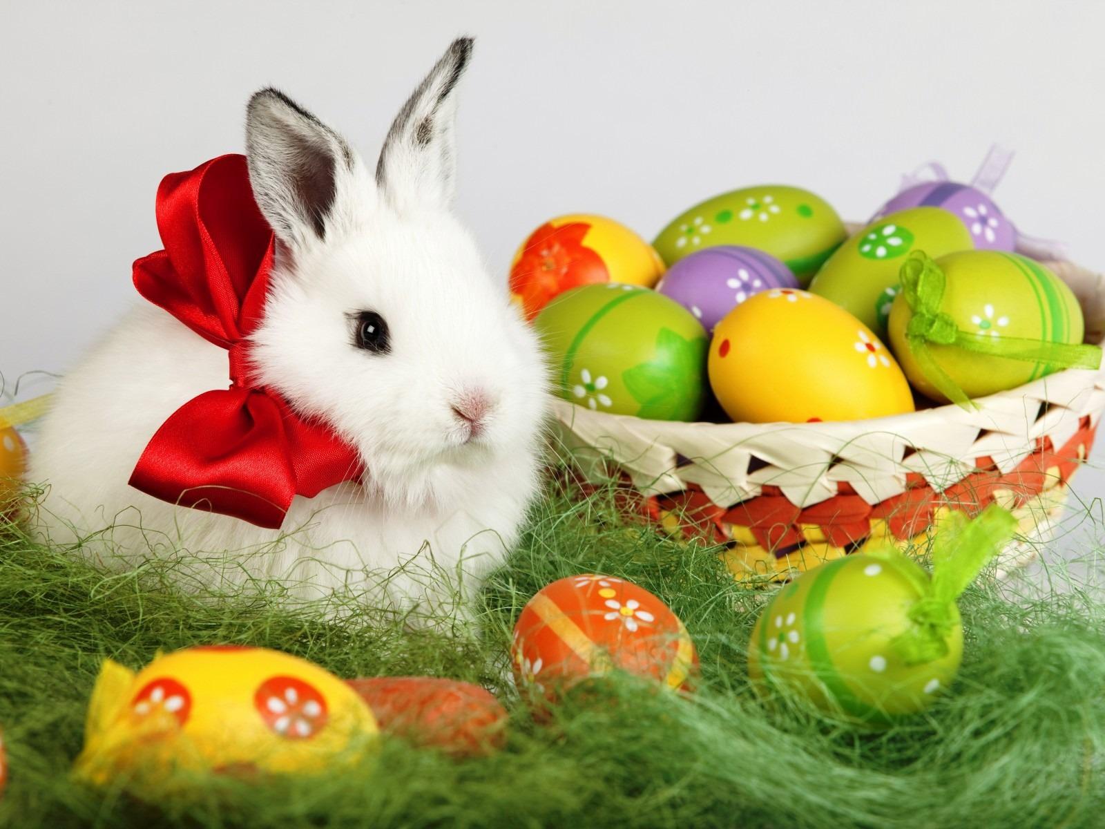 30 easter bunny wallpapers backgrounds images - Easter desktop wallpaper ...