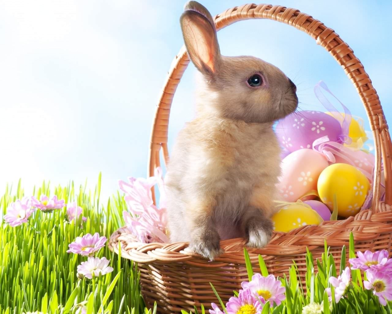 HD Easter Bunny Wallpaper For You