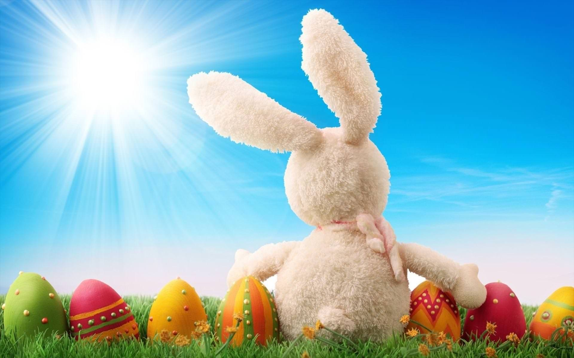 30+ Easter Bunny Wallpapers, Backgrounds, Images
