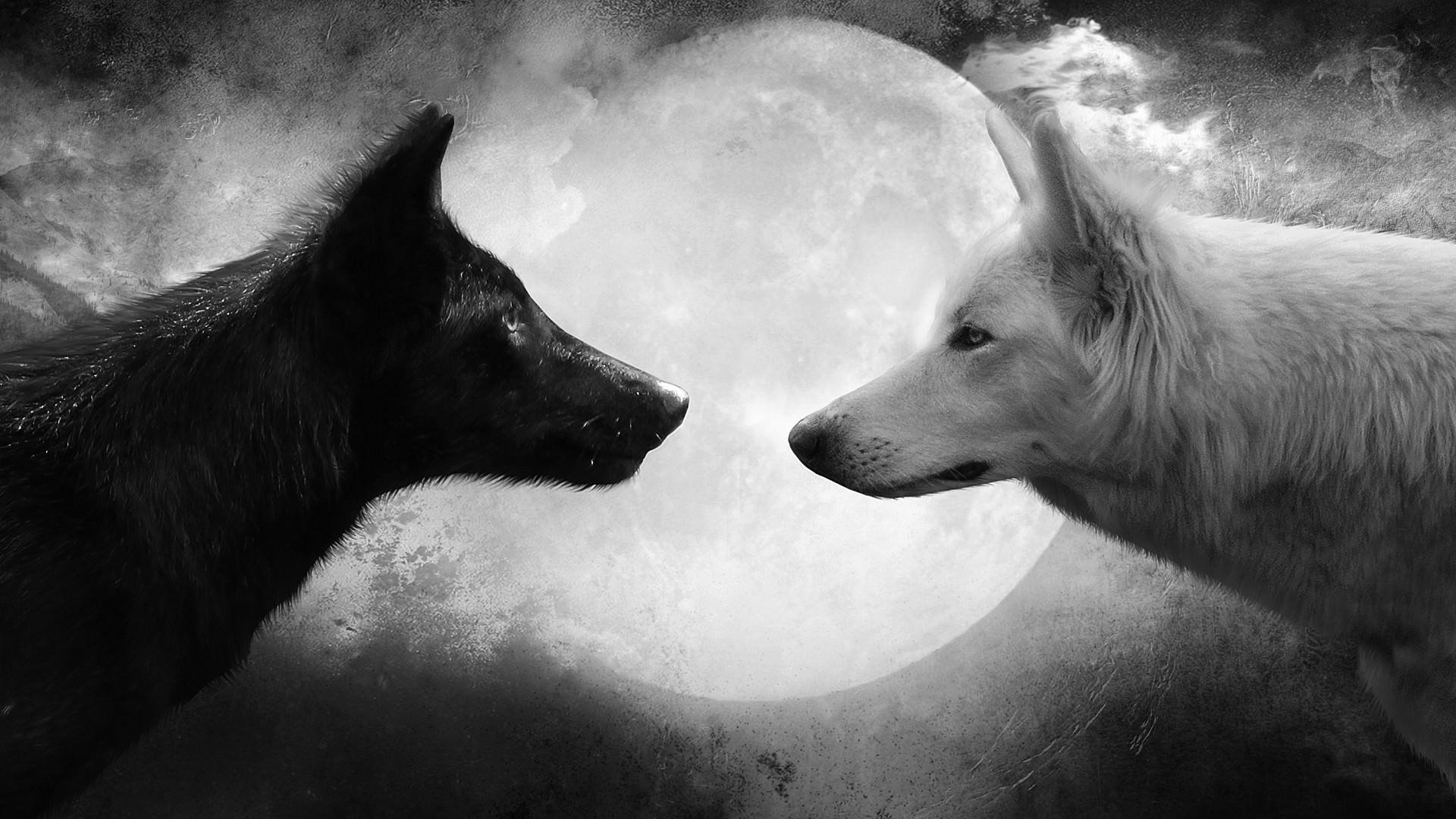 Black & White Wolf Background