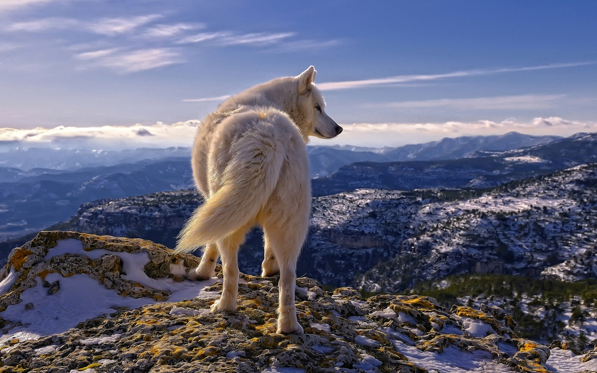 Wolf at Top of the Hill Background