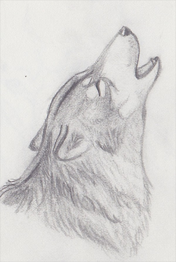 Howling Wolf Drawing