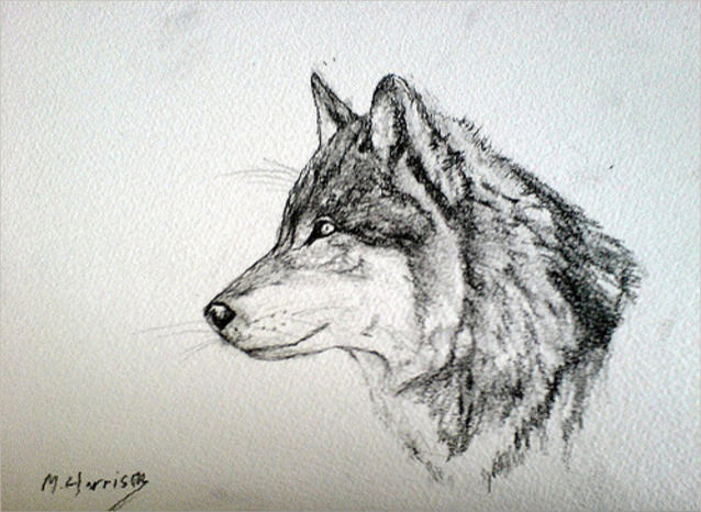 Amazing Wolf Drawing