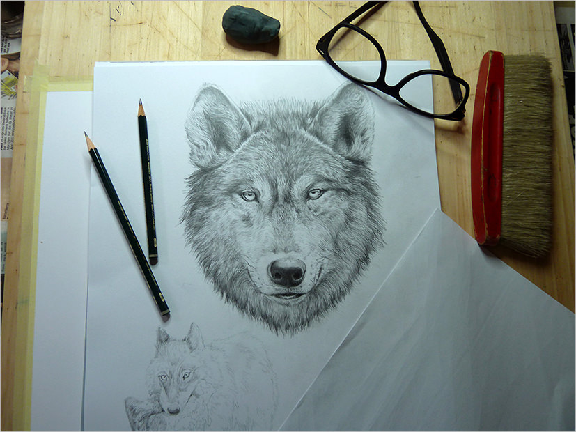 Fabulous Wolf Drawing For Download