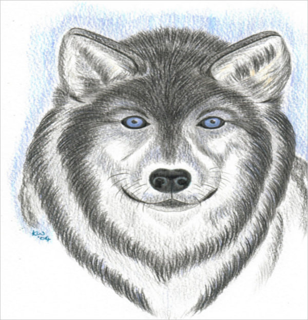 Wolf Drawing with Colored Pencil