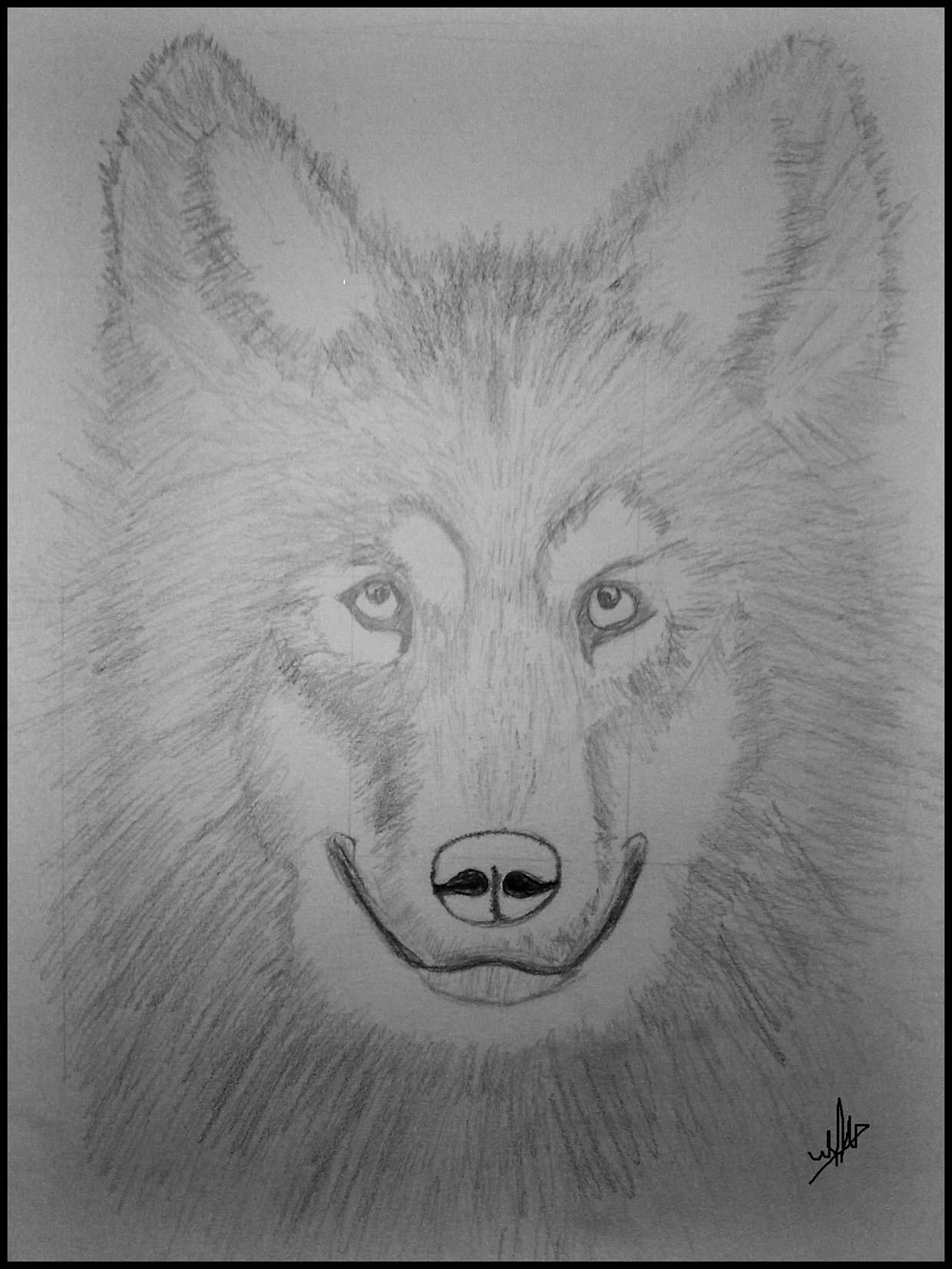 Proportional Wolf Drawing For You