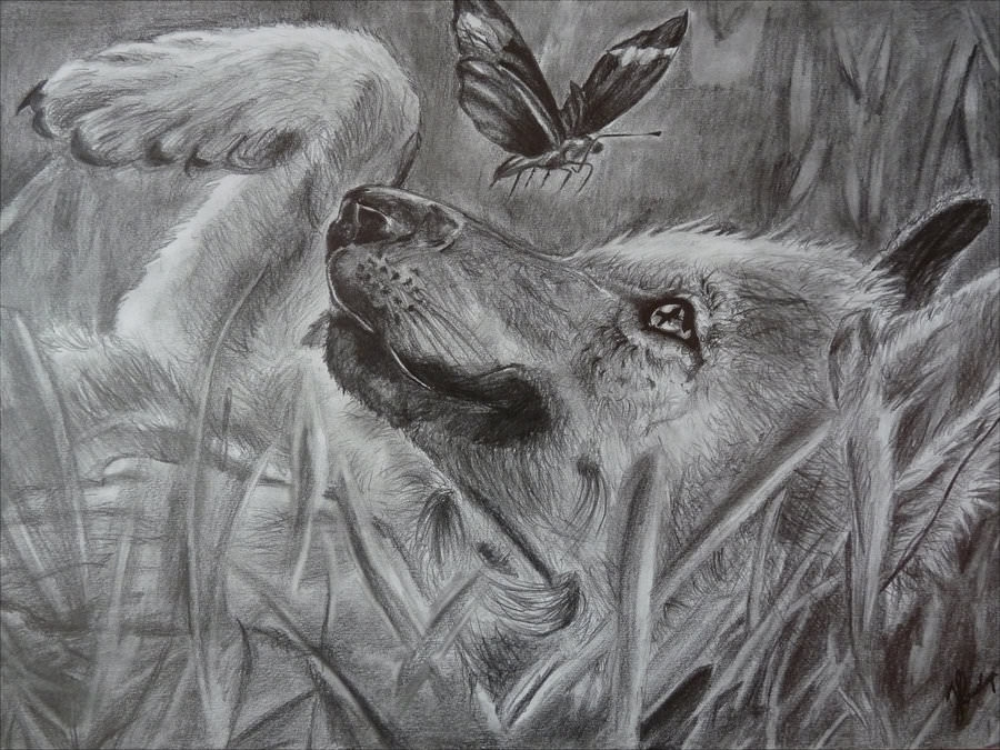 Wolf Playing with Butterfly Drawing