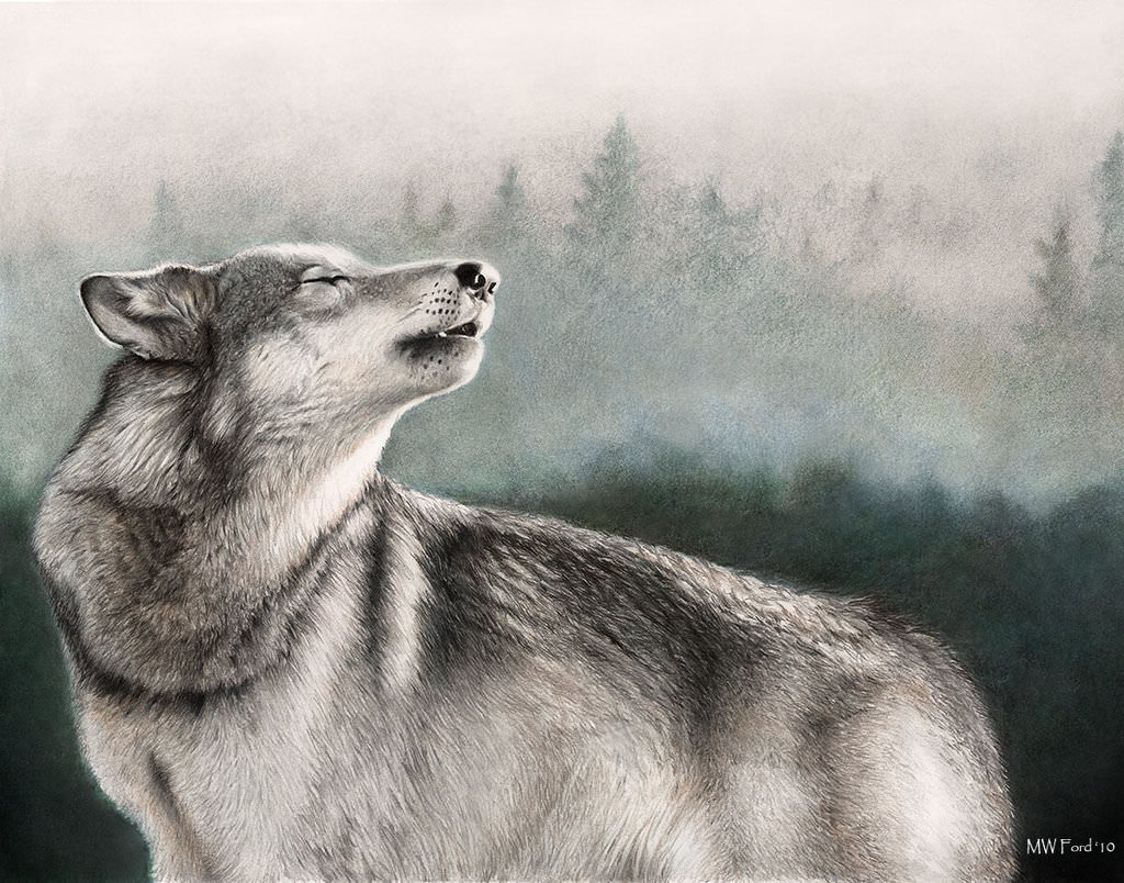 Wonderful Wolf Drawing