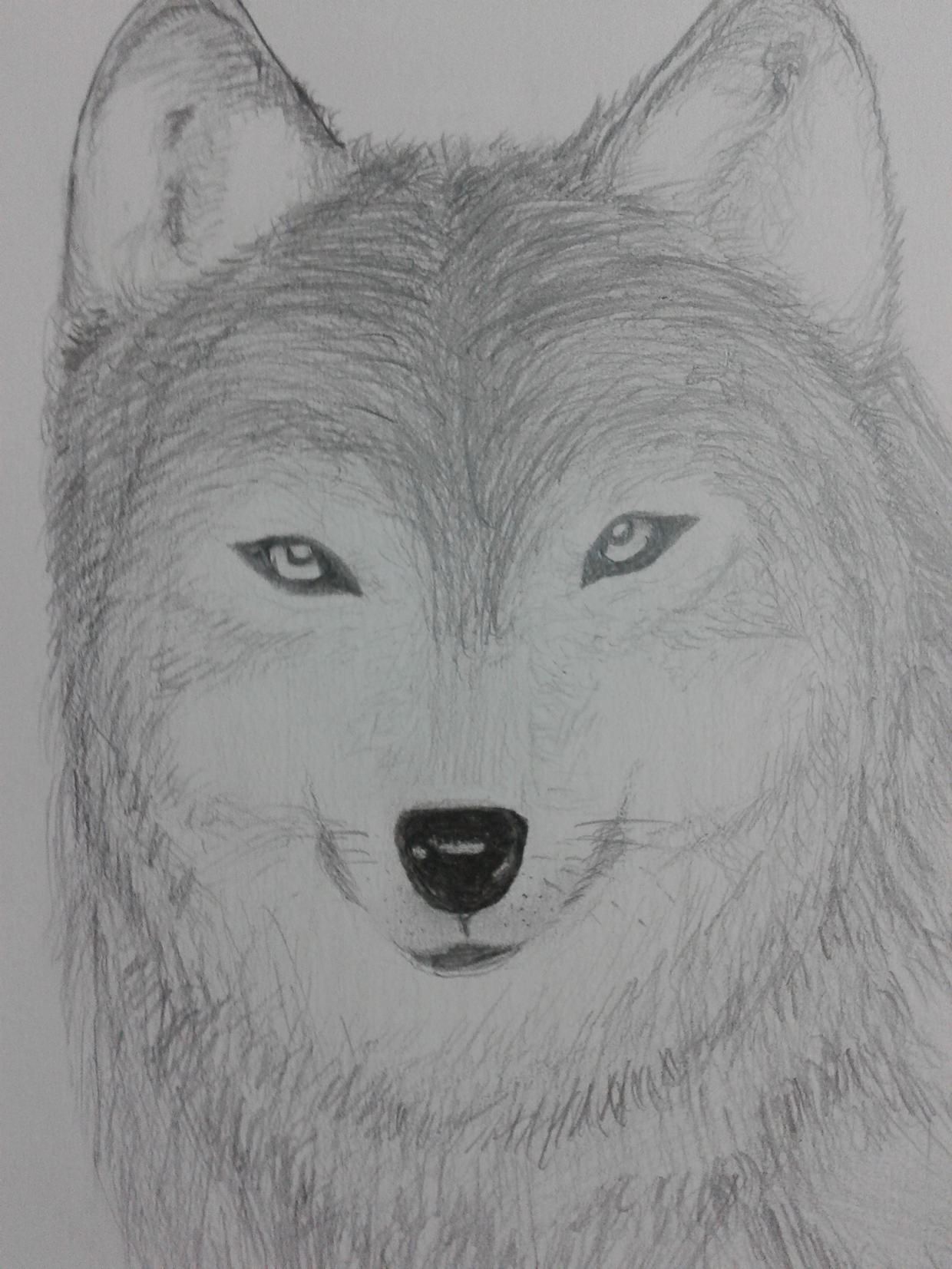 Fantastic Wolf Drawing For Free