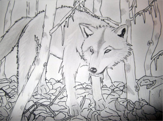 Free Wolf Drawing For You