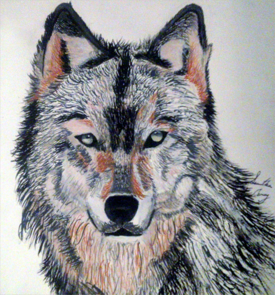 Magnificent Wolf Drawing