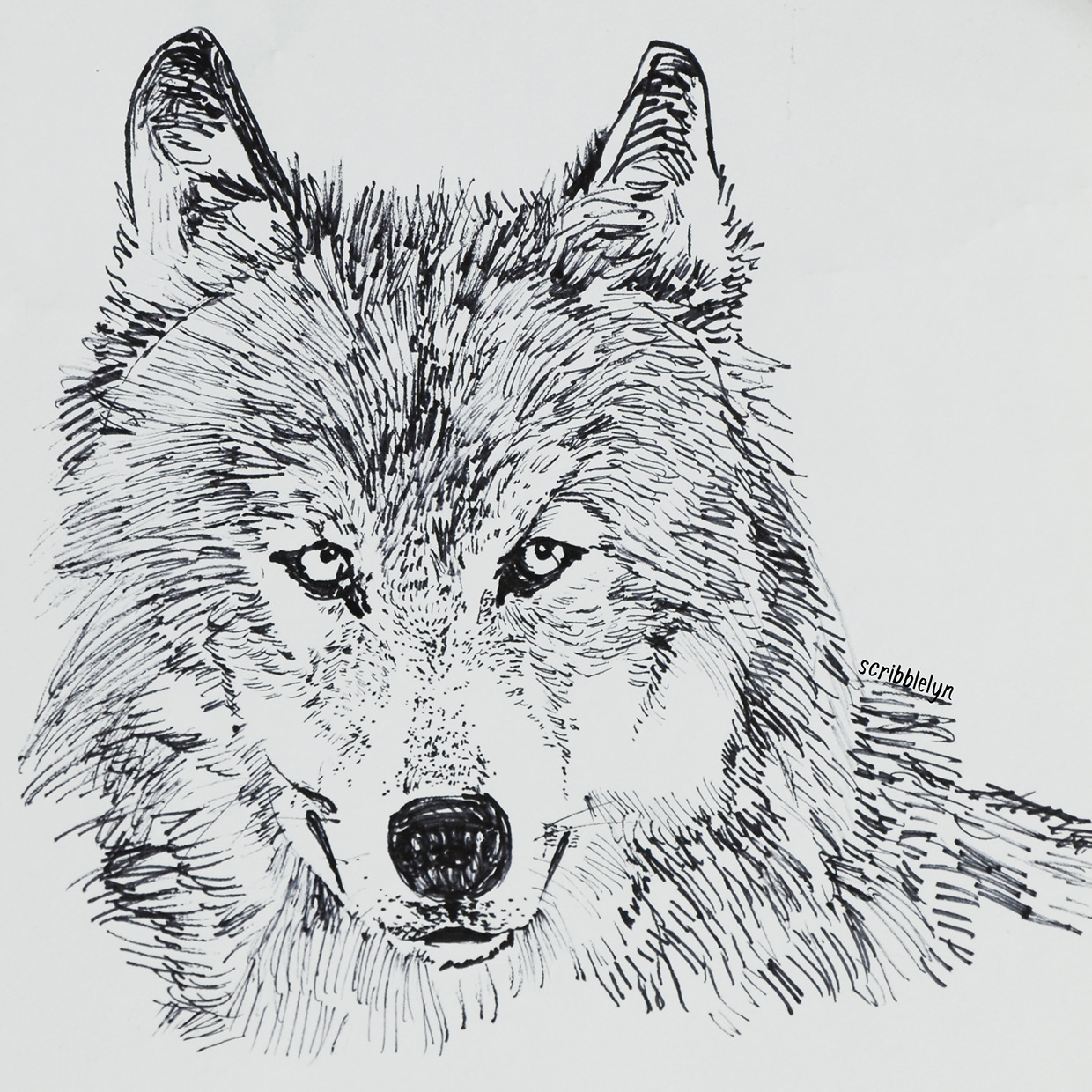 Drawing of Wolf For Free