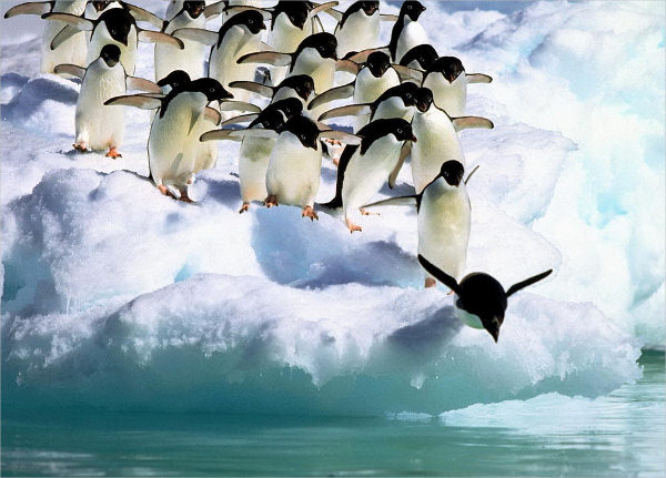 Adelie Penguins Antarctica Wallpaper
