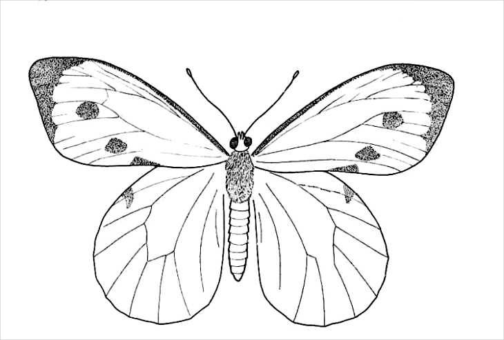 Butterfly Line Drawing Easy : Butterfly drawings jpg download
