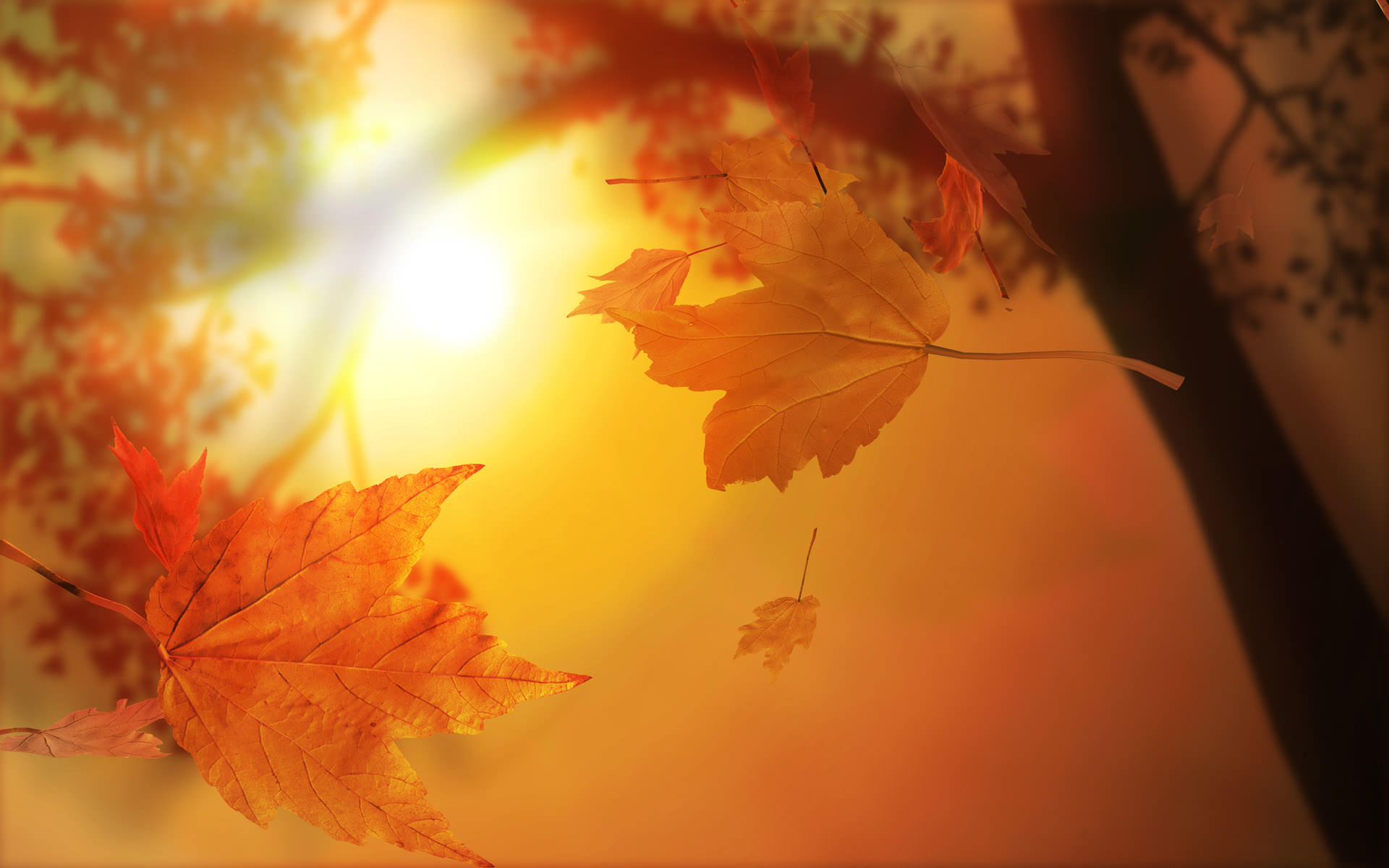 Amazing Autumn Wallpaper