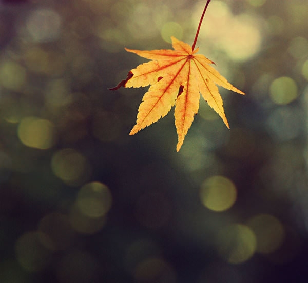 amazing fall texture for download