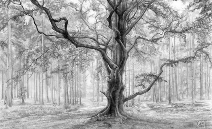 amazing tree drawing