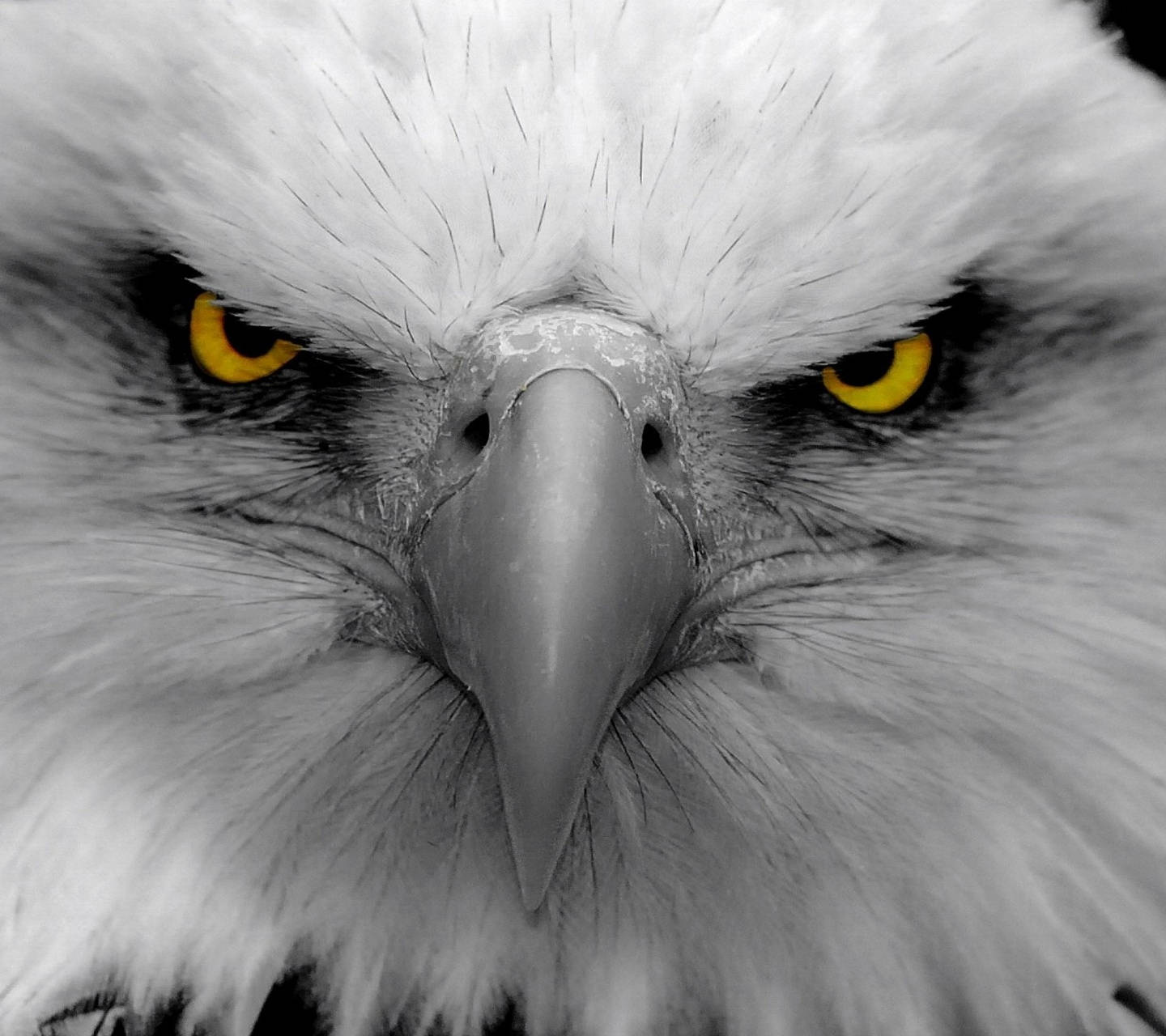 Angry Eagle Wallpaper