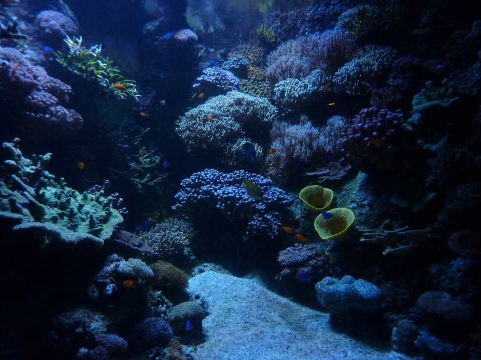 Aquarium Marine Background