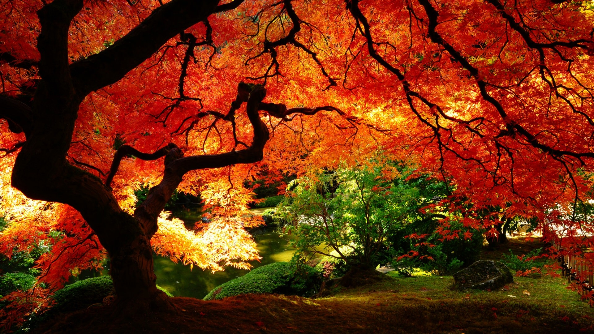 20 fall wallpapers backgrounds images freecreatives