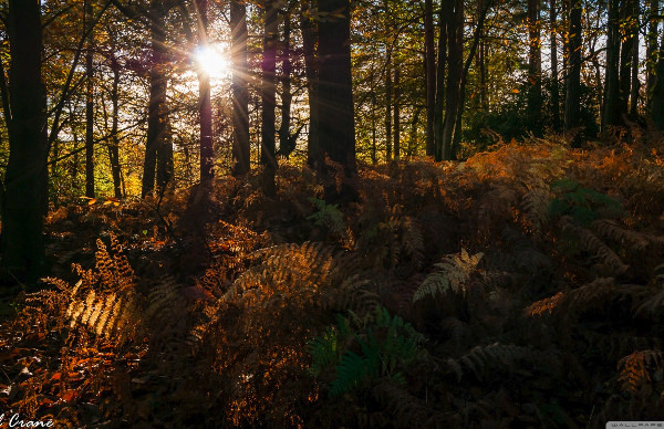 Autumn Rays Through Forest Wallpaper
