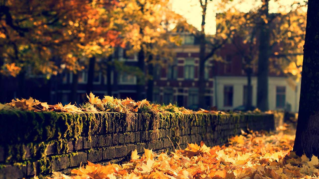Autumn Town Wallpaper