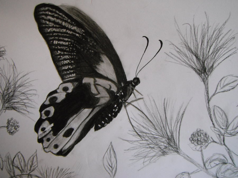 Awesome butterfly drawing