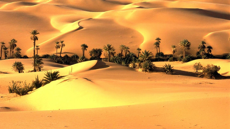 beautiful desert wallpaper