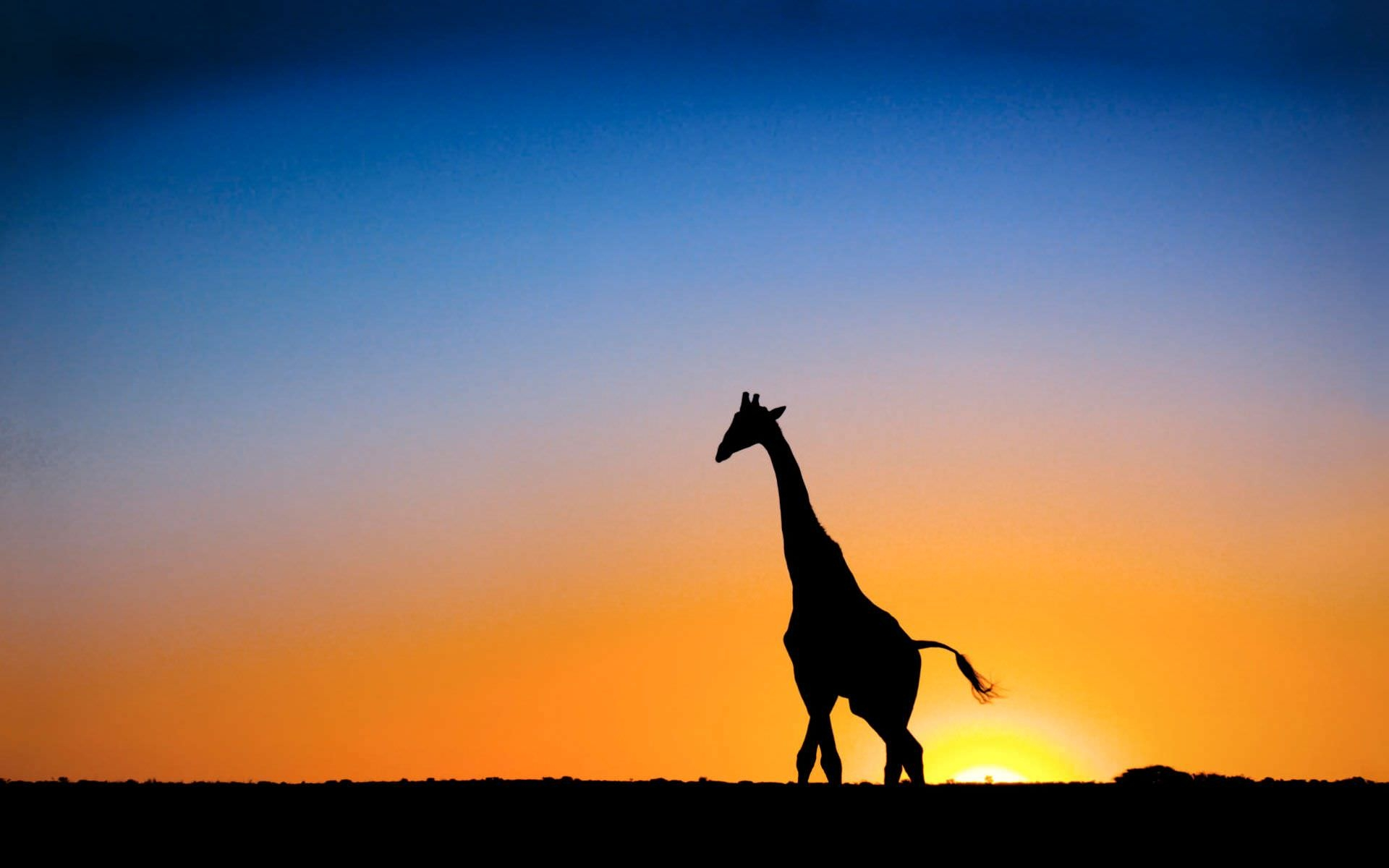 Beautiful Giraffe Wallpaper