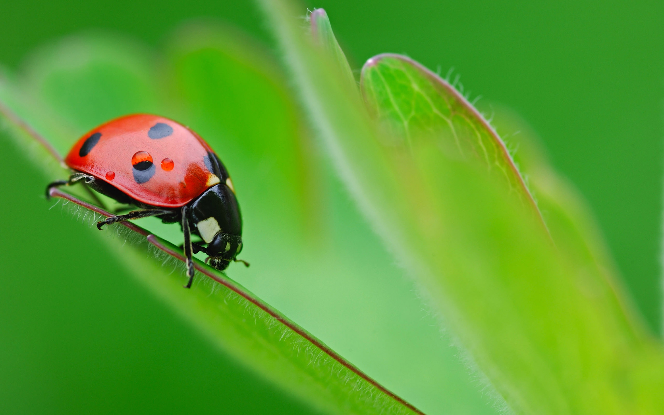beautiful ladybug wallpaper for free