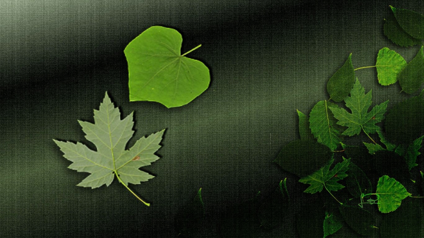 Beautiful Leaf Background