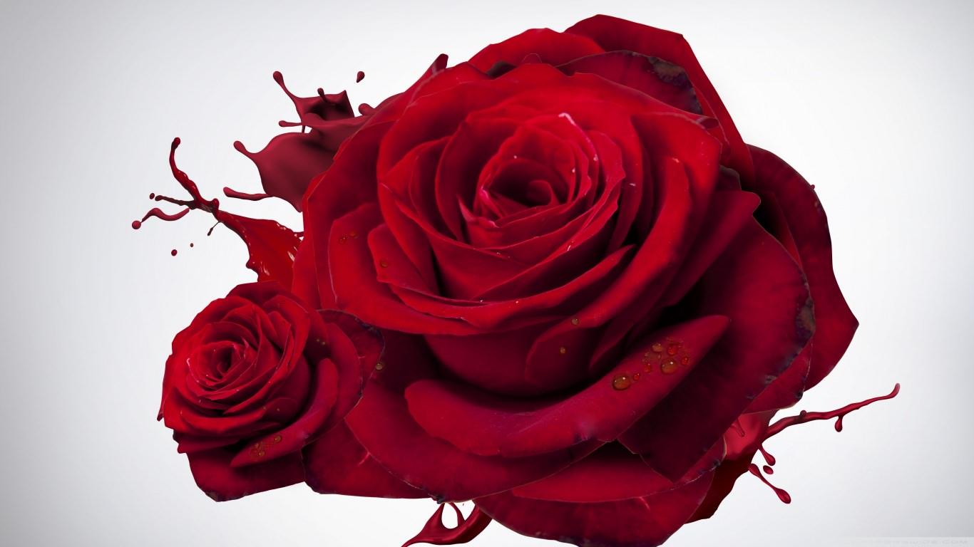 Beautiful Red Roses Wallpaper