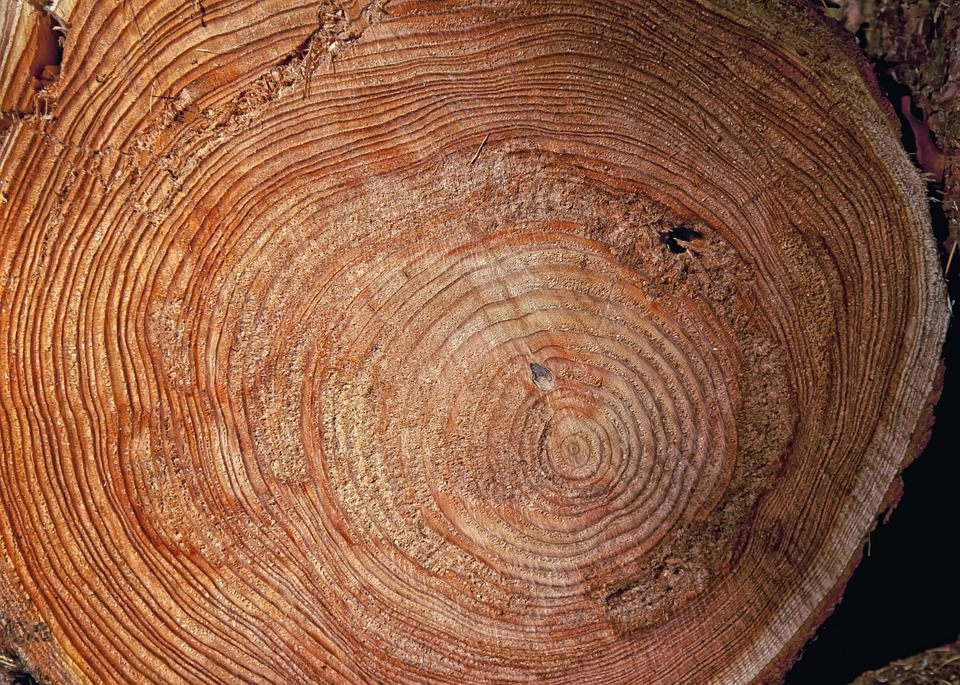 Brown Tree Ring Texture