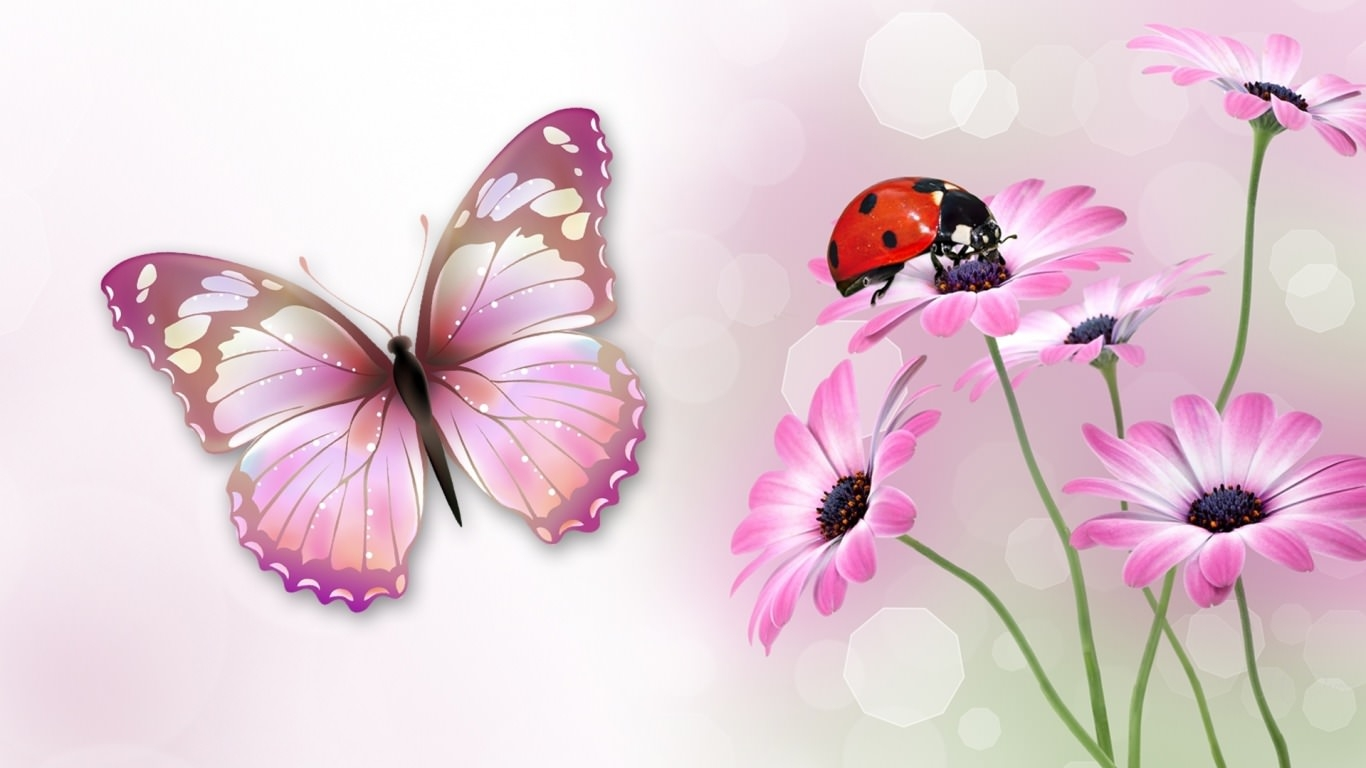 butterfly ladybug wallpaper