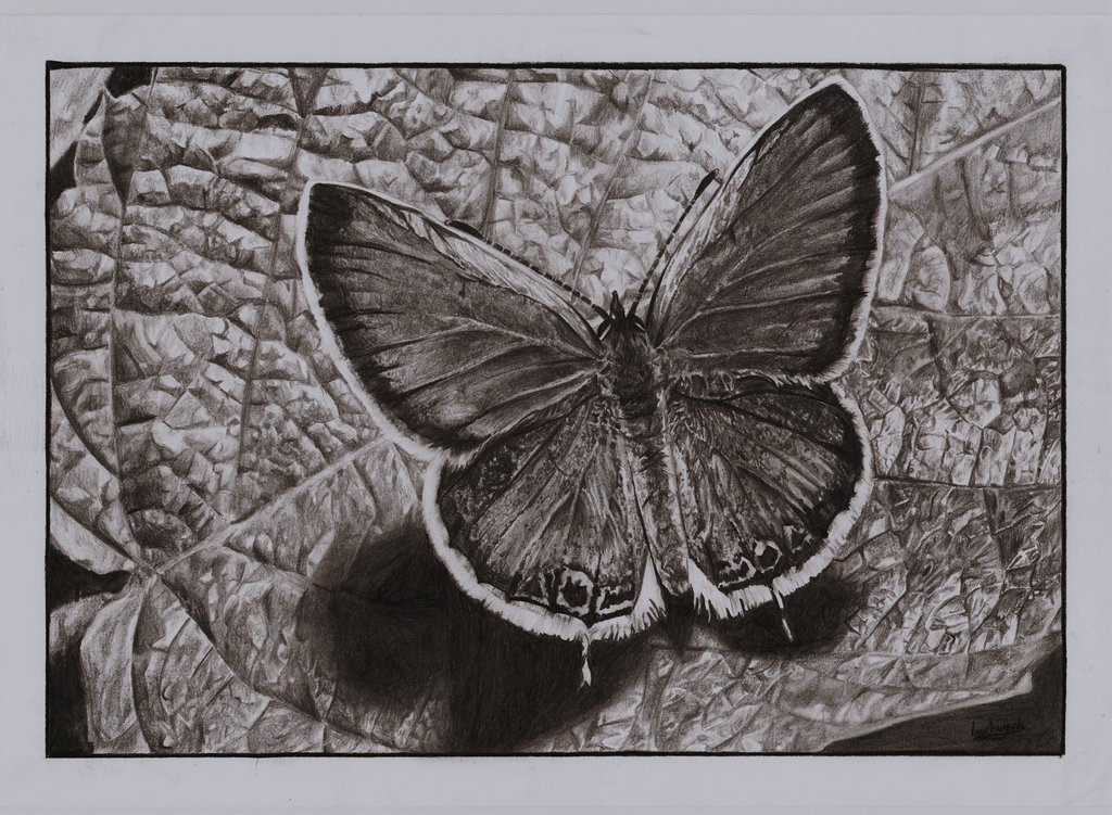 Butterfly Sitting on Leaf Drawing